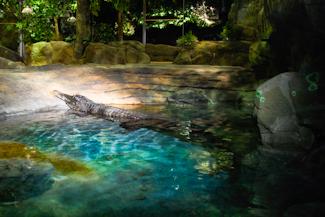 Virginia Public Aquarium : Arts & Entertainment :: VBgov.com - City of Virginia Beach
