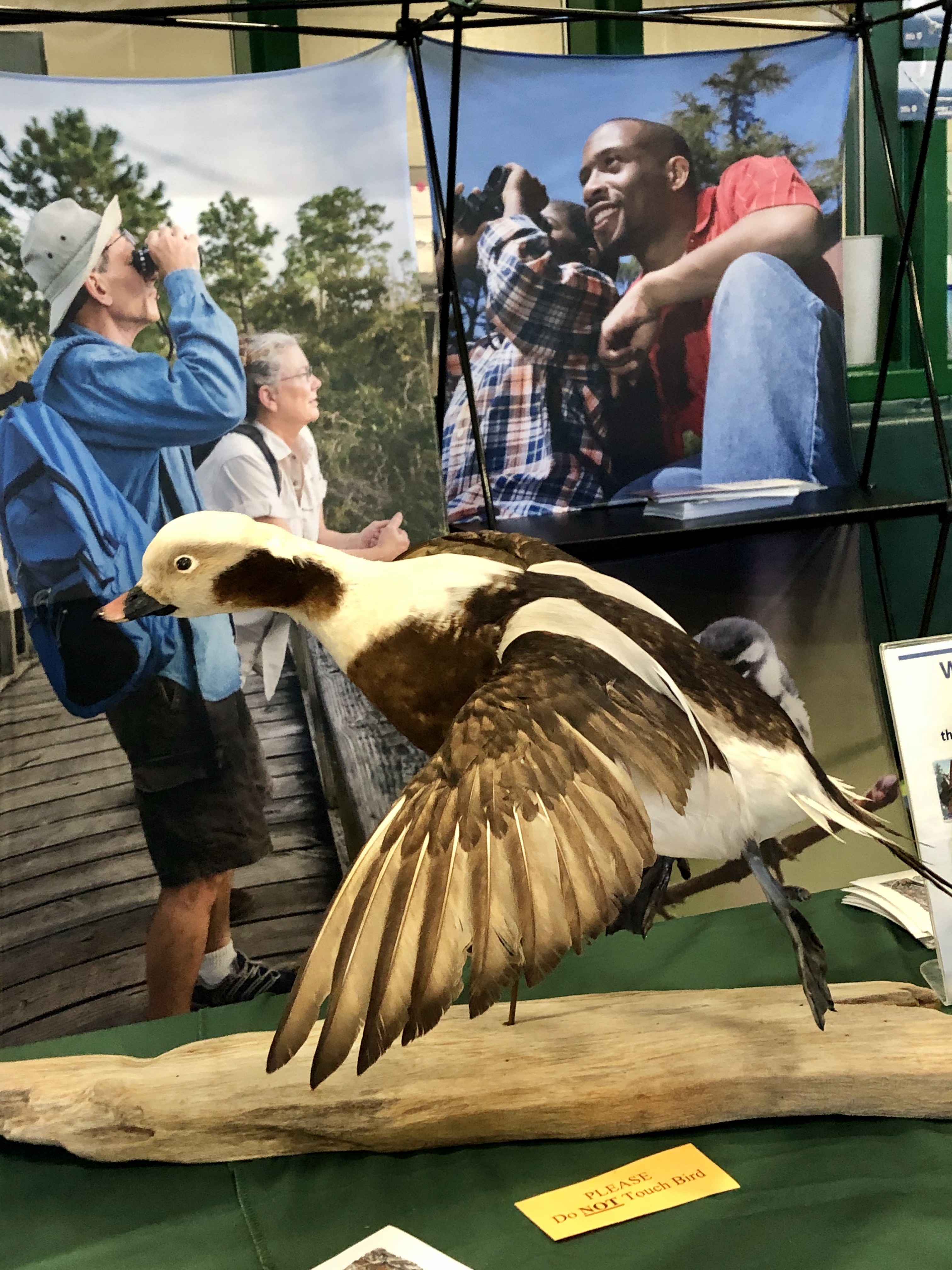 mounted duck at exhibit hall